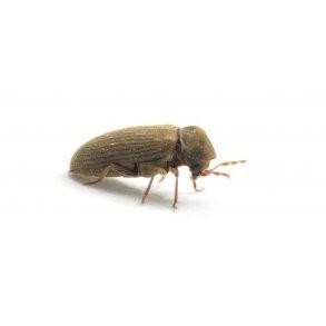 Træbeskyttelsesmiddel mod insekter